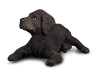 Labrador Retriever Pui S Collecta