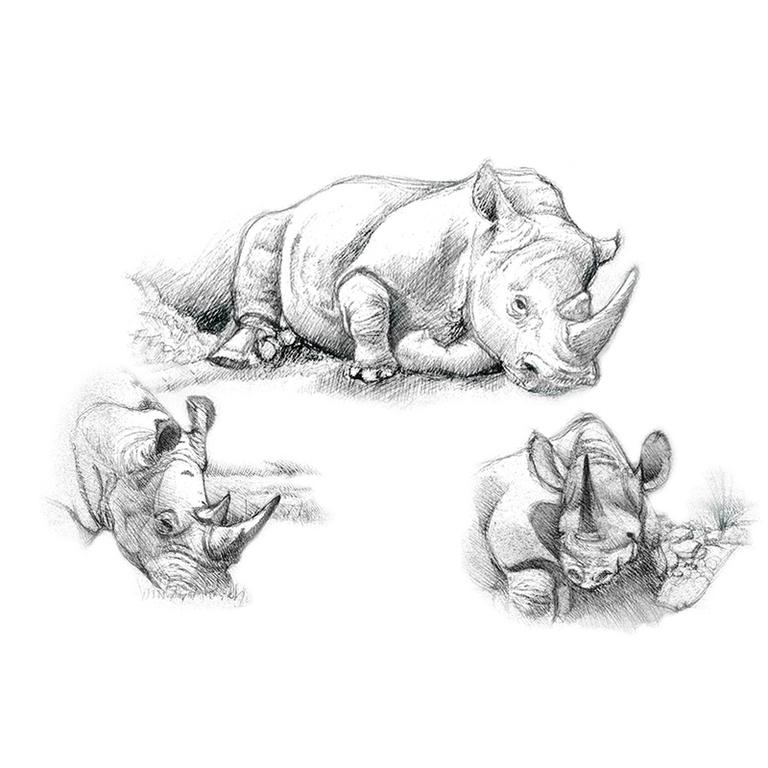 prețuri incredibile intreaga colectie o selecție uriașă de Set pentru realizarea unui desen in creion - Rinoceri - - SKBNL-3 ...